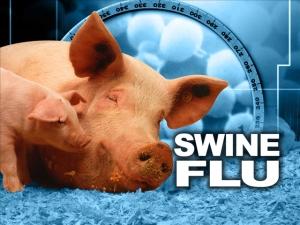 swine flu 3